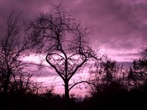 Sumário e árvore de amor bonita fotografia de stock royalty free