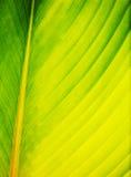Sumário em folha de palmeira no fim acima Imagem de Stock Royalty Free