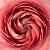 Sumário floral Imagens de Stock Royalty Free
