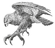 Sumário poderoso do pássaro. ilustração do vetor