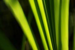 Sumário verde Fotografia de Stock