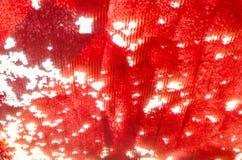 Sumário vermelho do fundo Fotos de Stock