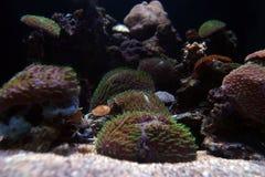 Sumários subaquáticos fotografia de stock royalty free