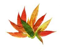 Sumac Leaf stock images