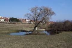 sumarice мемориального парка стоковые изображения rf