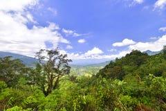 Sumatera verde di Forest Daylight West fotografia stock libera da diritti