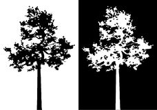 Sumatran pine tree silhouette. Sumatran pine tree silhouette black and white vector illustration