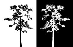Sumatran pine tree silhouette vector. Sumatran pine tree silhouette vector (black and white royalty free illustration