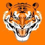 Sumatran Tiger Stockfoto