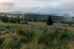 Sumava国家公园 免版税图库摄影