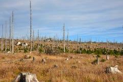 Sumava山,树皮甲虫死的森林 库存图片