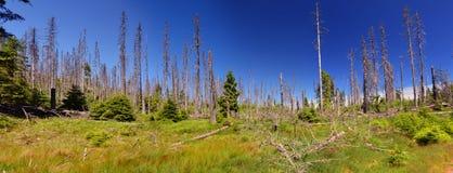 Sumava, il parco nazionale di Sumava, repubblica Ceca Immagine Stock Libera da Diritti