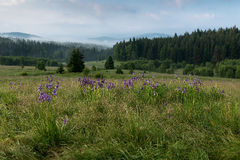 Sumava National Park Stock Photography