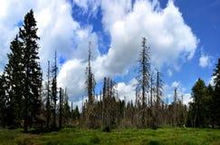 Sumava, park narodowy, republika czech Zdjęcie Stock