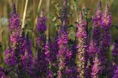 Sumer-Blumen lizenzfreie stockfotografie