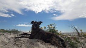 Summer dog holiday stock photography