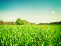 Sumer filed with green grass Stock Photography