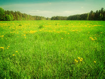 Sumer filed with green grass Royalty Free Stock Photo