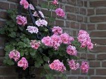 Sumer in the garden Stock Photo