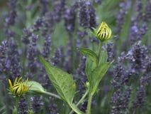 Sumer in the garden Royalty Free Stock Photos