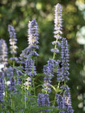 Sumer in the garden Stock Photography