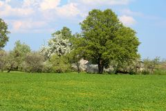 Sumer time landscape. Sumer time green landscape in sunny day Royalty Free Stock Photography