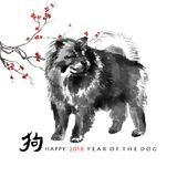 Sumi-e dog card. Greeting card Chinese new year. A chow chow and a branch of cherry blossom, oriental ink painting. With Chinese hieroglyph `dog` and text `Happy vector illustration