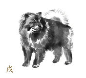 Sumi-e dog. Chow chow oriental ink painting with golden Chinese hieroglyph `dog`. Symbol of the new year. Original sumi-e art Royalty Free Stock Photo