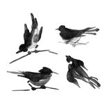 Sumi-e ink collection of birds. Watercolor painting. Stock Image