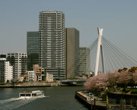 Sumida River View in Tokyo. Japan, Tokyo, Sumida river, sakura, Spring 2008 Royalty Free Stock Photography
