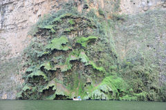 Sumidero Canyon Christmas tree Royalty Free Stock Photos