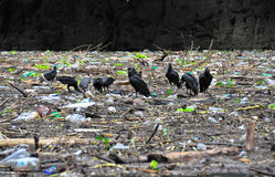 Free Sumidero Canyon Vultures, Mexico Royalty Free Stock Images - 16514809