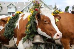 Sumiswald, Zwitserland, 14 September 2018: Sluit omhoog van een koe royalty-vrije stock afbeeldingen