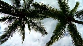 Summen Sie herein auf schöne Palmen mit weißen Wolken laut stock video