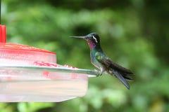 Summenvogel, der auf einer speisenstation sitzt Lizenzfreie Stockfotos