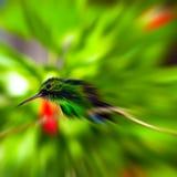 Summenvogel - lautes Summen blured lizenzfreies stockfoto