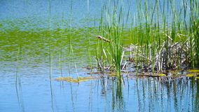 Summer湖在一个晴天 库存照片