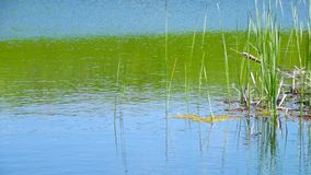 Summer湖在一个晴天 免版税库存照片