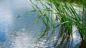 Summer湖在一个晴天 库存图片