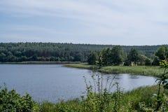 Summer湖在森林里 库存图片
