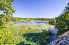 Summer瑞典湖-从小山的看法 免版税图库摄影