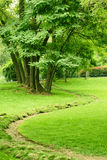 Summer. Aestival scenery of park in the morning Royalty Free Stock Image