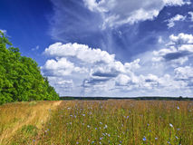 Summer. Y field landscape at midday Royalty Free Stock Images