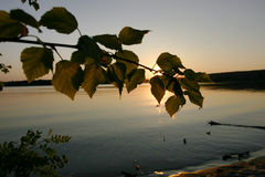 Summer. Birch branch and sunset stock images