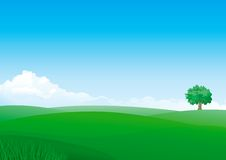 Summer. Vector summer landscape of green fields with grass and alone tree. File includes high res jpg, eps Stock Photography