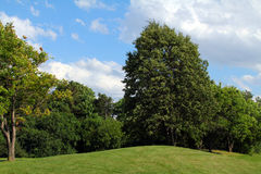 Summer. The view of a tree on the blue sky andgreen grass backround Royalty Free Stock Photos