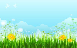Summer. Background with grass, flowers, sky Royalty Free Stock Photography