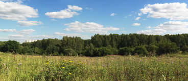 Summer. Panorama of summer meadow and blue sky stock photo