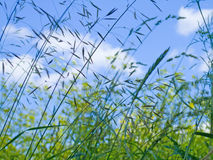 Summer. Blue sky and fresh green grass Royalty Free Stock Photography