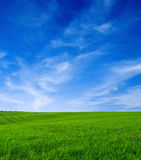 Summer. Landscape Royalty Free Stock Photography
